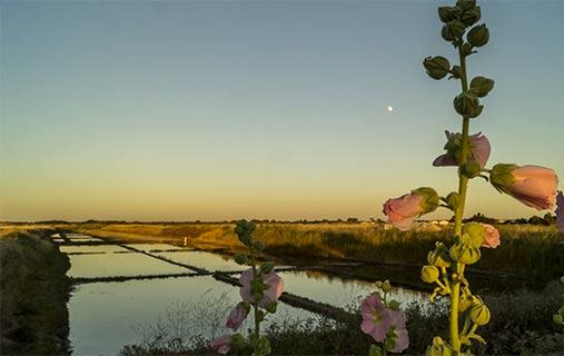 Camping salt marsh Charente Maritime