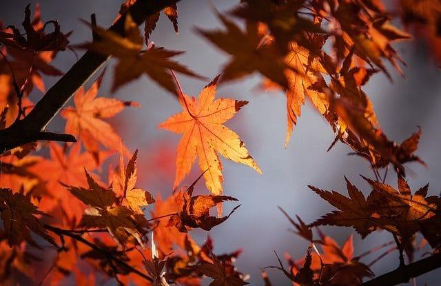 L'automne a l'ile de re