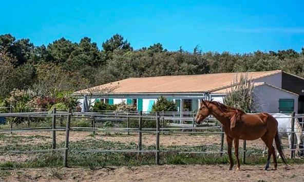 Paardrijden Ile de Ré