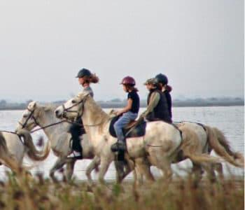 Promenade à cheval sur l'ile de ré