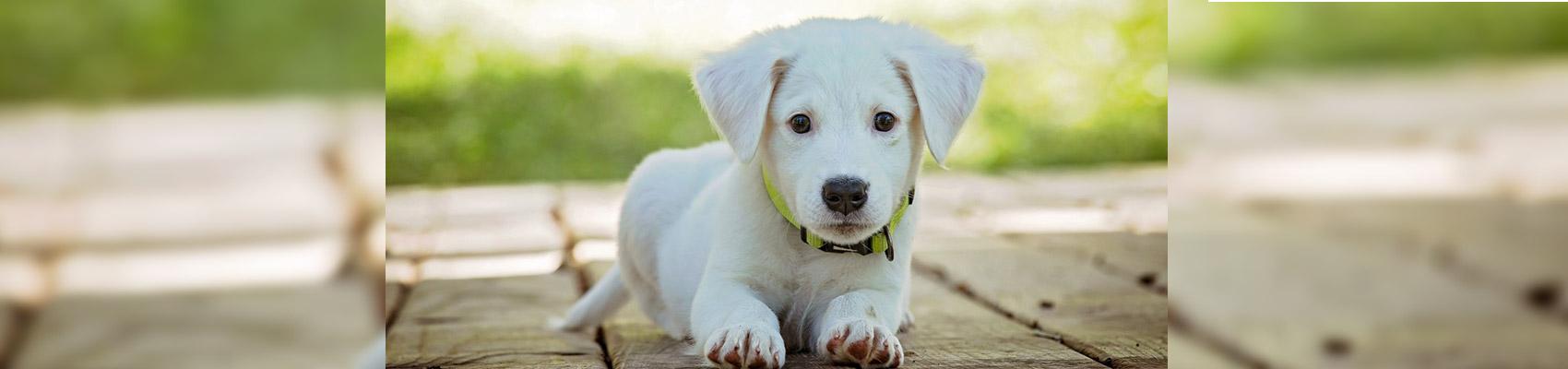 camping chien admis ile de re