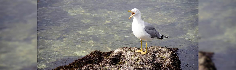 ou voir des cormorans sur l'ile de ré
