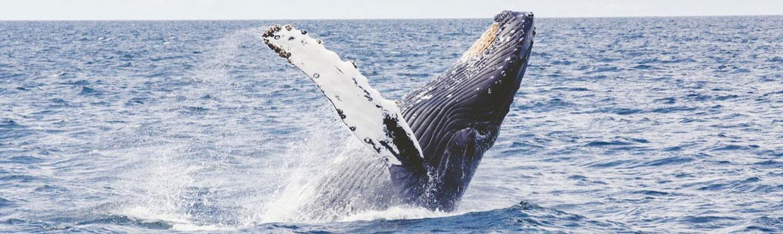 puis je voir des baleines sur l'ile de re ?